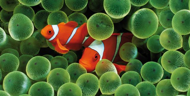 Malattie pi comuni nei pesci d acquario io e il mio animale - Pesci piu comuni in tavola ...