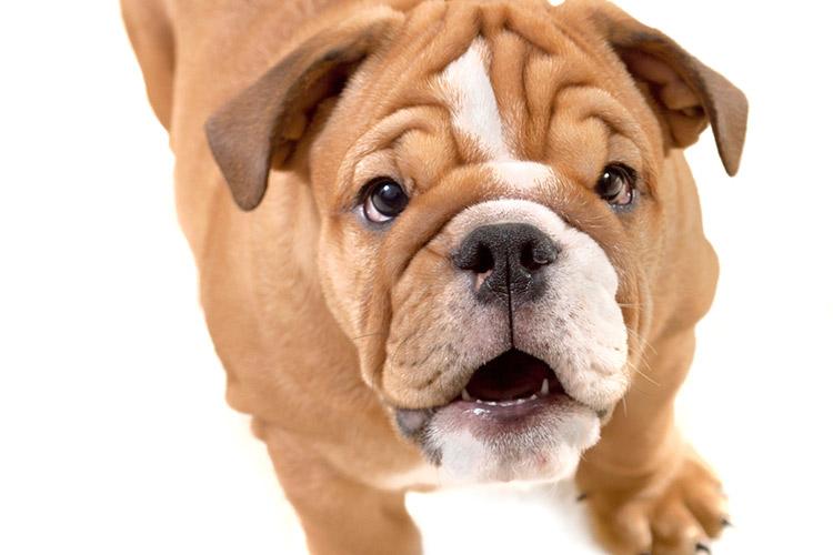 www.cuteness.com