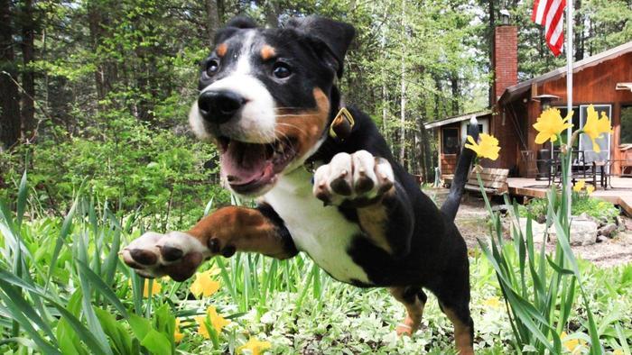 dogs-sneeze