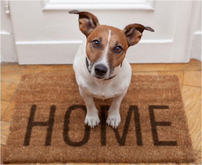 Le razze di cane adatte per l appartamento a parte io e il