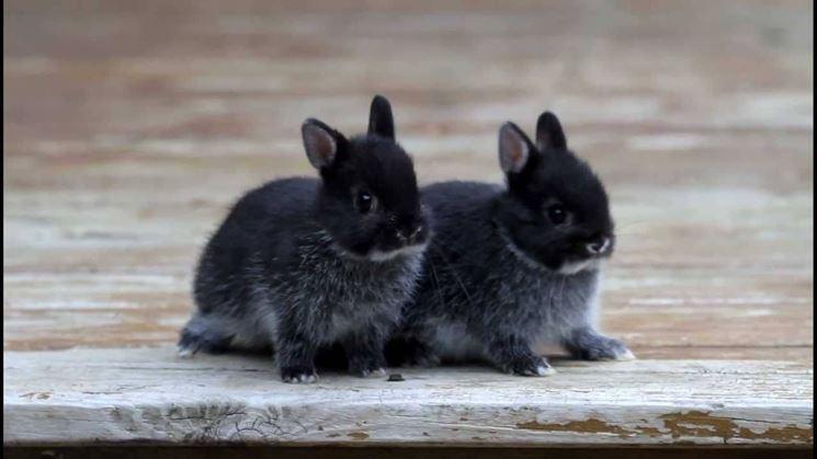 Come Scegliere Una Lettiera Per I Conigli Io E Il Mio Animale