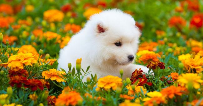 8 consigli utili per il benessere del tuo cane in for Animali da giardino finti