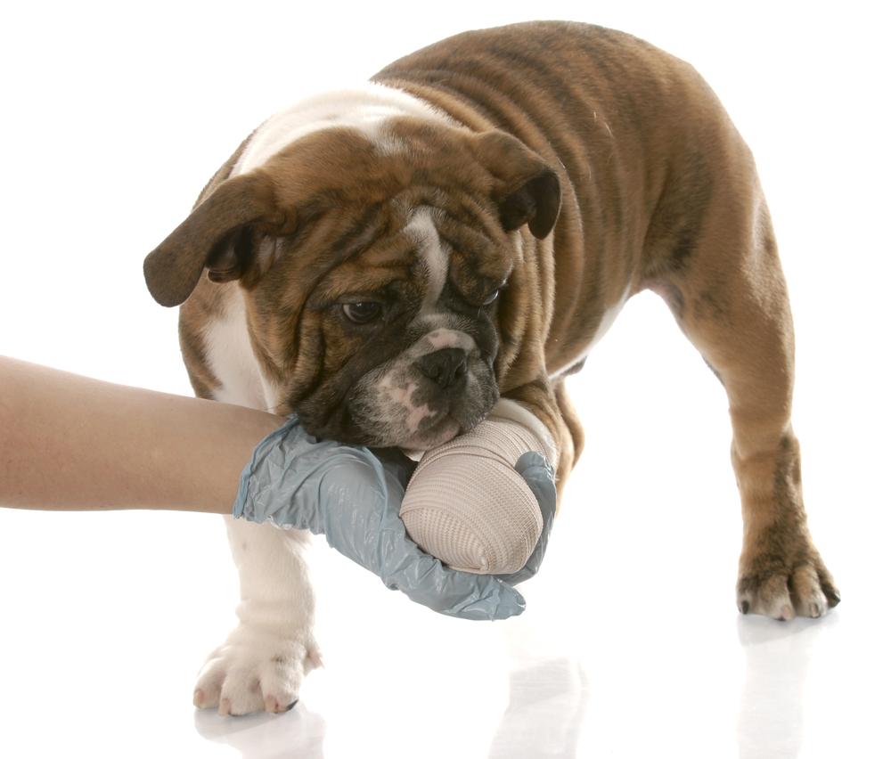 Cane Che Zoppica Perché E Cosa Significa Io E Il Mio Animale